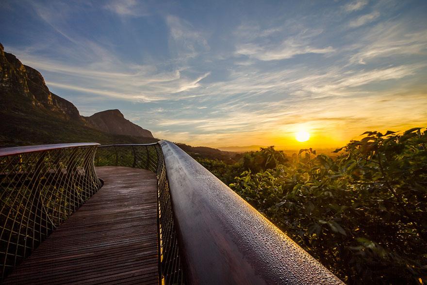 Прогулочная тропа Канопи в ботаническом саду Кирстенбош, ЮАР, Кейптаун
