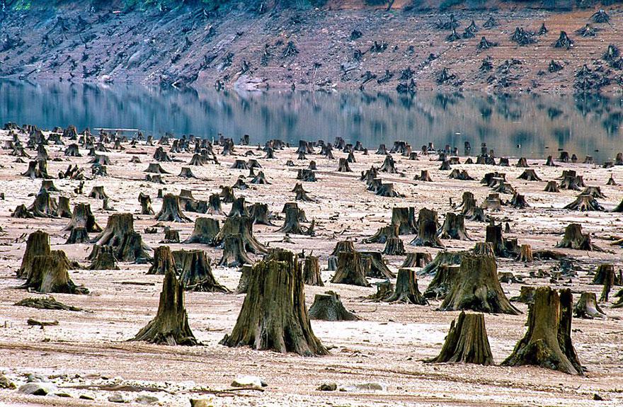 Национальный парк Виламет, штат Орегон, США. 99% леса вырублено