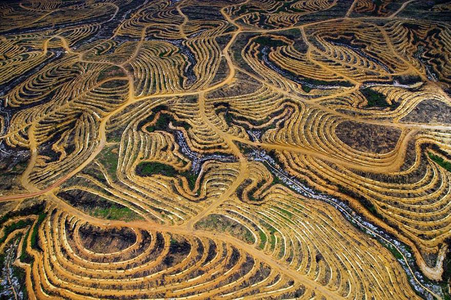 Индонезийский лес преобразованный в пальмовую плантацию
