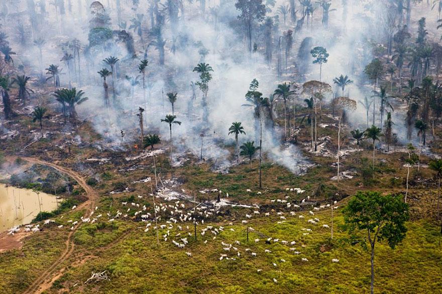 Часть джунглей Амазонки, выжжена для использования земли в других целях