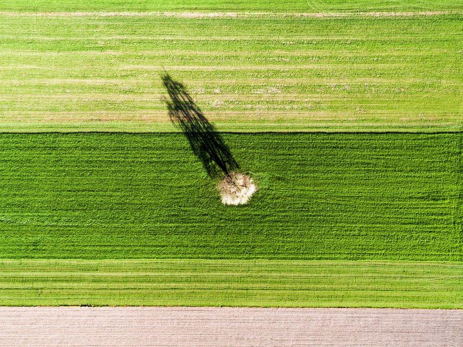 Одинокое дерево, Альтвис, Швейцария. Фото с высоты