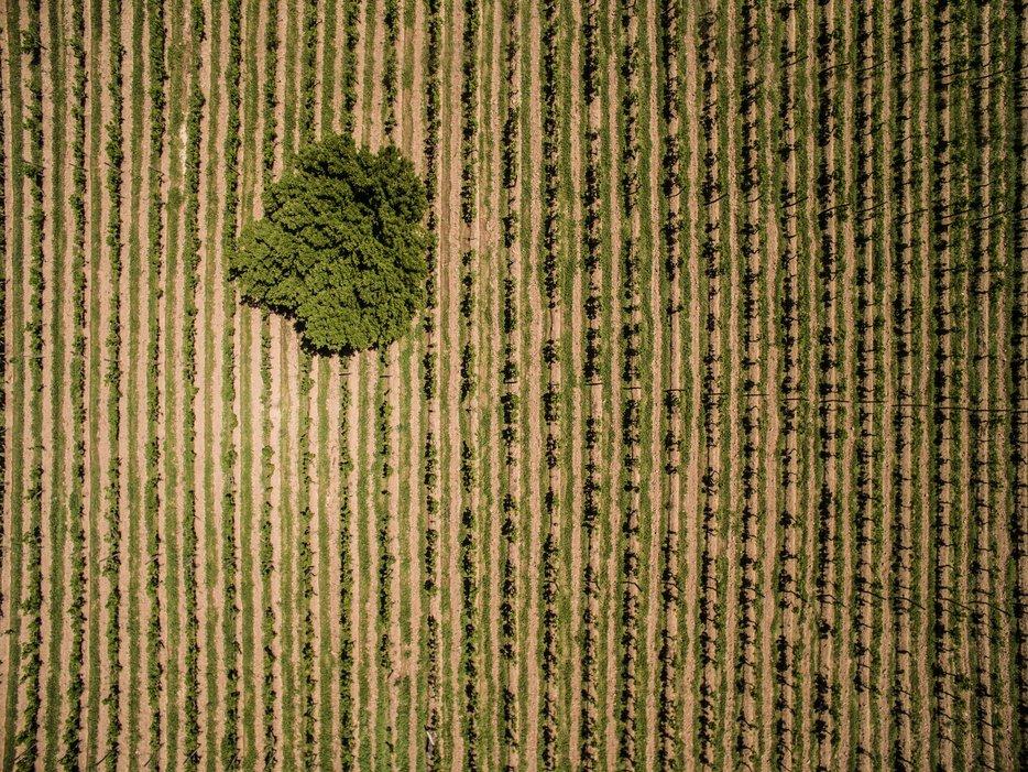 Виноградники, Валье-де-Консепсьон, Боливия. Фото с высоты