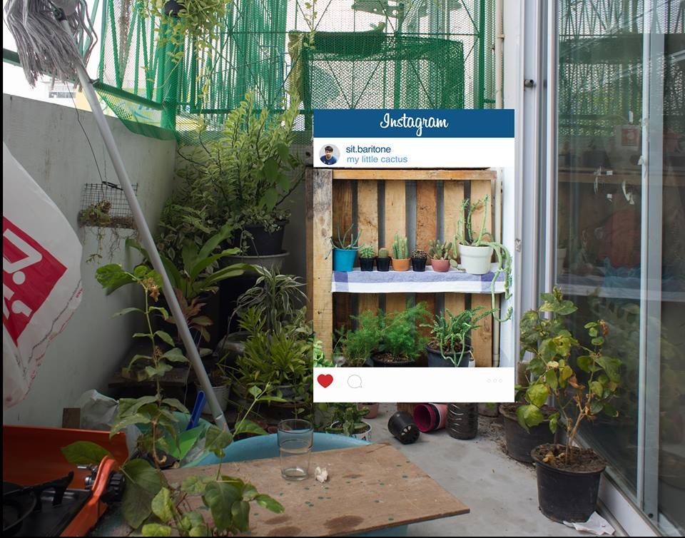 Комнатные растения в Инстаграм. Что за кадром?