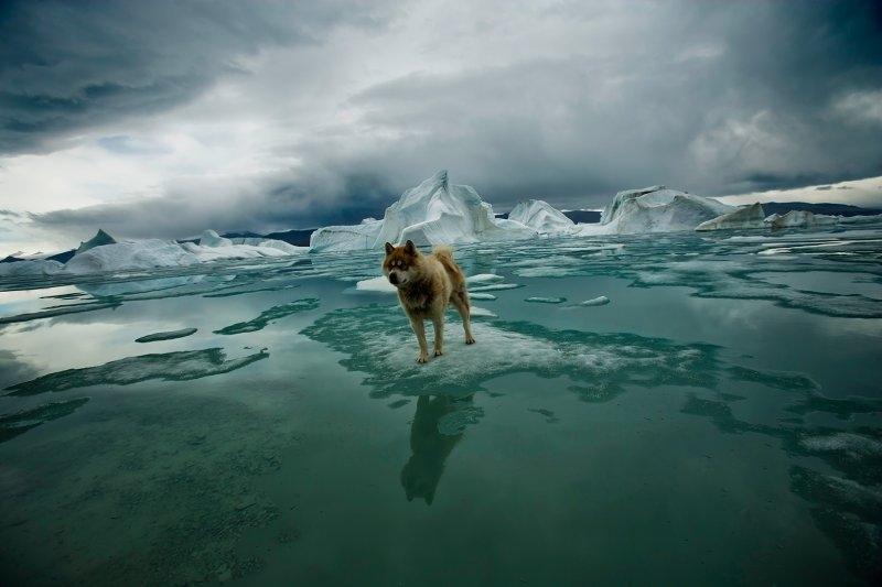 Собака заранее предупреждает о приближении медведей, фотограф Себастьян Коупленд