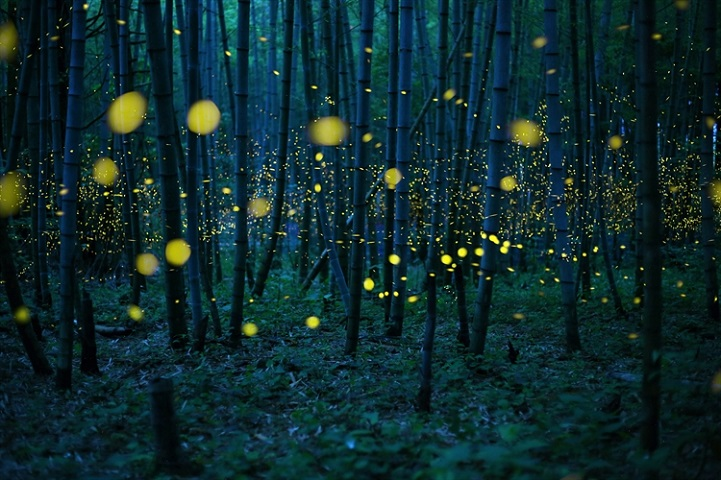 """Enchanted Bamboo Lights"" by Kei Nomiyama, Japan"