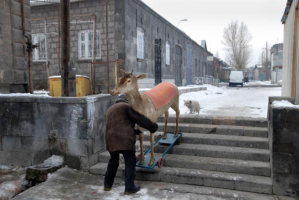 Гюмри, Армения. Мужчина стаскивает по лестнице чучело оленя