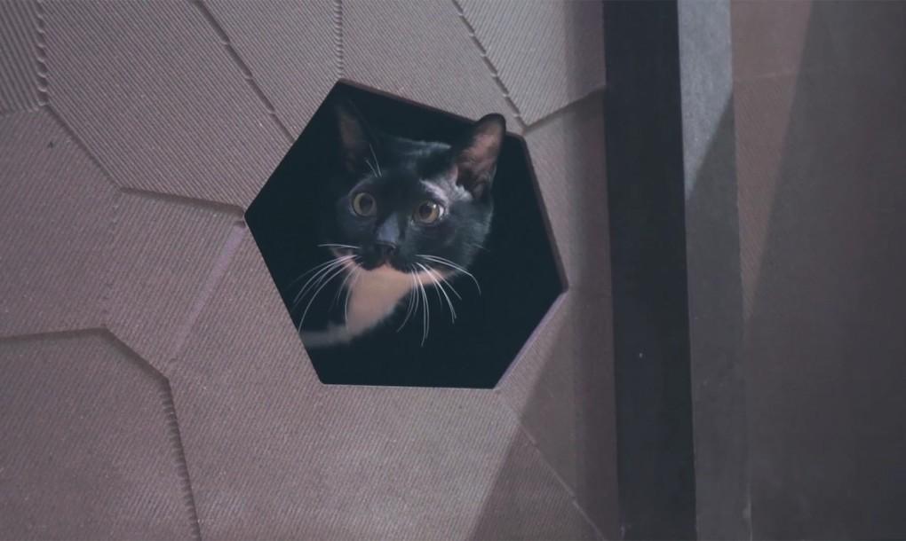 Убежище для котика